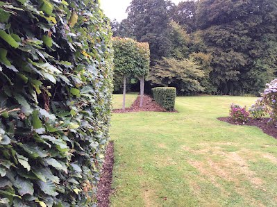 Templebreedy gardens Pleached Limes & Beech Hedging